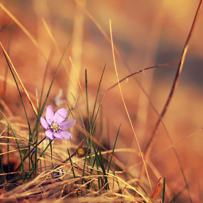 20 de fotografii cu frumusetile fiecarui anotimp - Poza 4