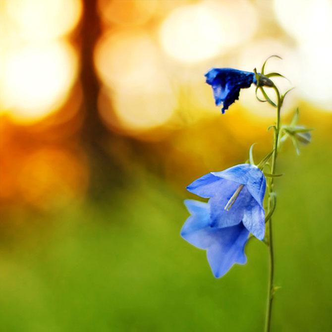 20 de fotografii cu frumusetile fiecarui anotimp - Poza 5