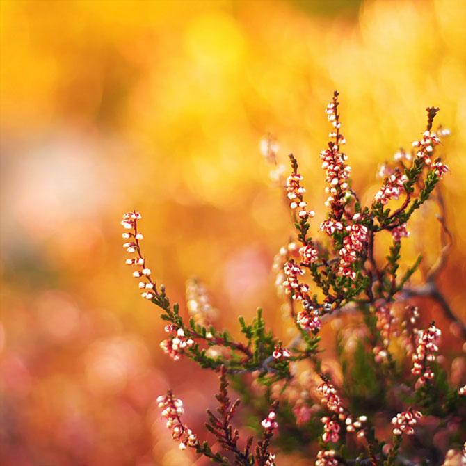 20 de fotografii cu frumusetile fiecarui anotimp