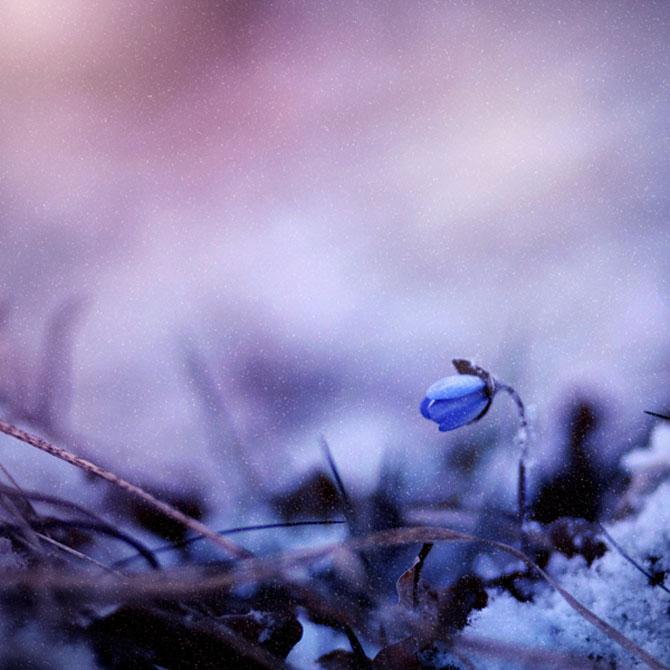 20 de fotografii cu frumusetile fiecarui anotimp - Poza 13