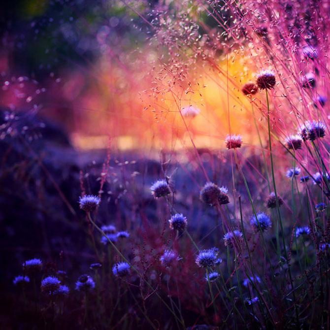 20 de fotografii cu frumusetile fiecarui anotimp - Poza 14