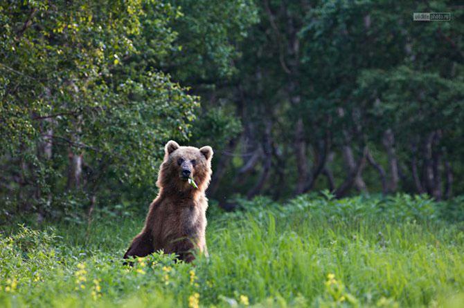 Peisajele Rusiei de basm, aduse la realitate - Poza 2