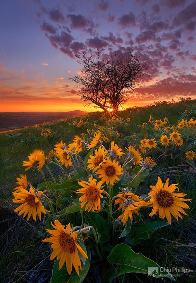22 de peisaje minunate, de Chip Phillips - Poza 16