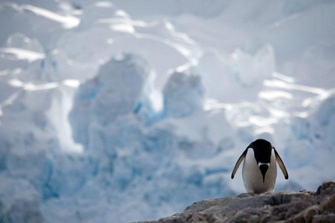 Unhappy Feet: Viata grea de pinguin, de Camille Seaman - Poza 1