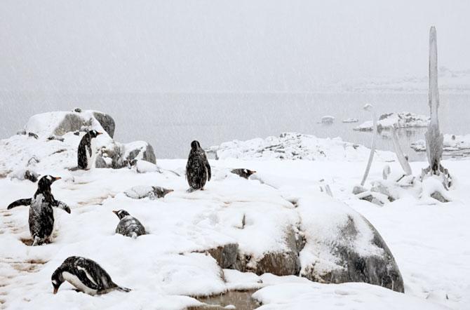 Unhappy Feet: Viata grea de pinguin, de Camille Seaman - Poza 3