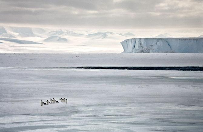Unhappy Feet: Viata grea de pinguin, de Camille Seaman - Poza 5