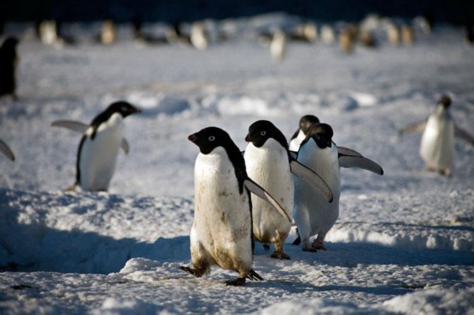 Unhappy Feet: Viata grea de pinguin, de Camille Seaman - Poza 6