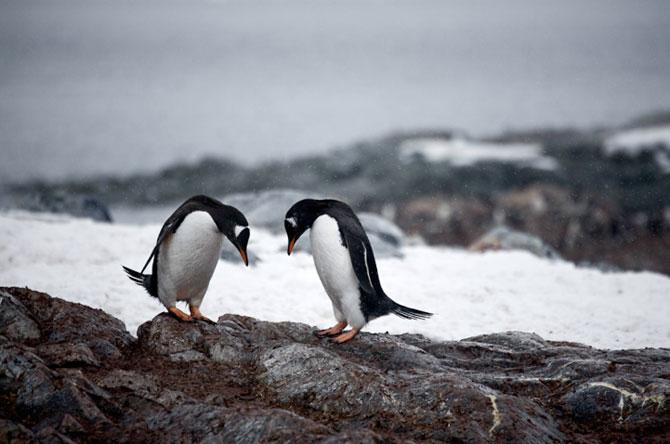 Unhappy Feet: Viata grea de pinguin, de Camille Seaman - Poza 7
