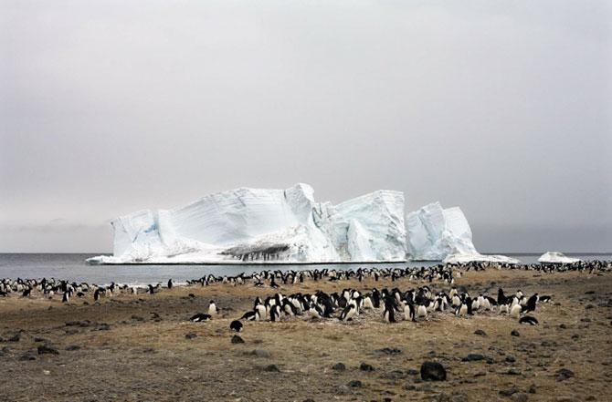Unhappy Feet: Viata grea de pinguin, de Camille Seaman - Poza 9