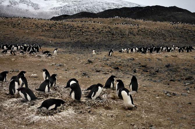 Unhappy Feet: Viata grea de pinguin, de Camille Seaman - Poza 10
