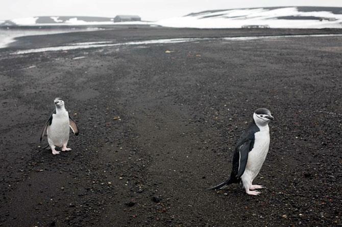 Unhappy Feet: Viata grea de pinguin, de Camille Seaman - Poza 11