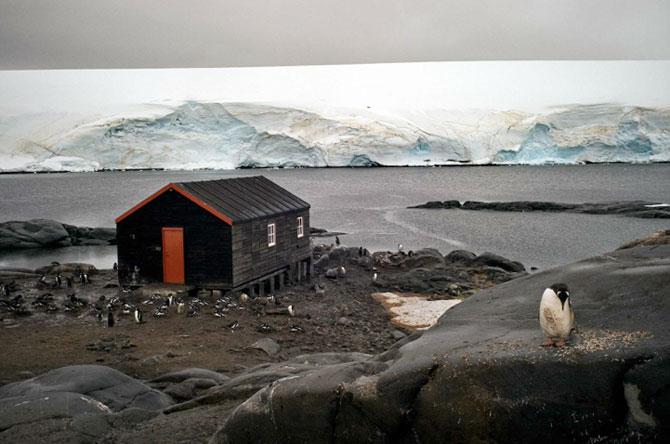 Unhappy Feet: Viata grea de pinguin, de Camille Seaman - Poza 12