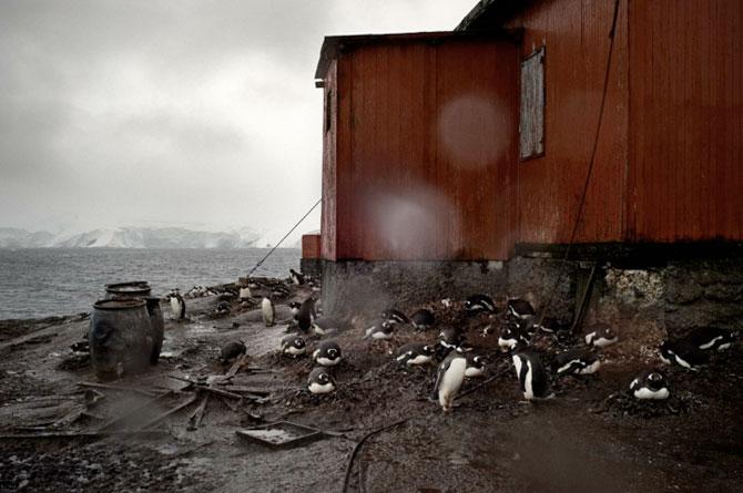 Unhappy Feet: Viata grea de pinguin, de Camille Seaman - Poza 13