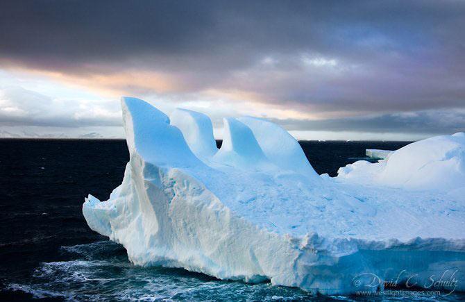 Fotograful David Schultz a marsaluit cu imparatul-pinguin - Poza 6
