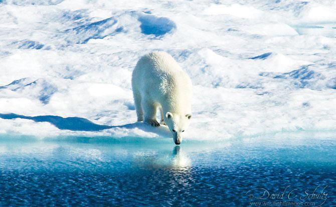 Fotograful David Schultz a marsaluit cu imparatul-pinguin - Poza 7