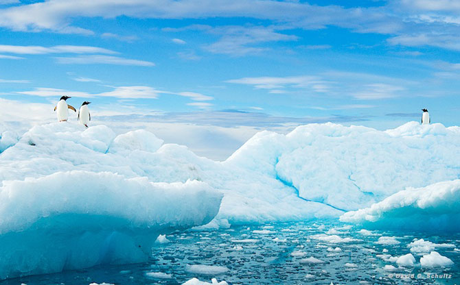 Regele pinguinilor imperiali - Poza 9