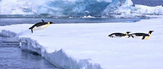 Regele pinguinilor imperiali - Poza 10