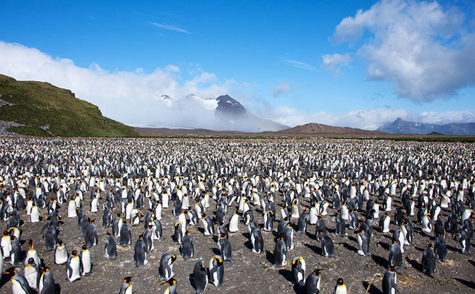 Regele pinguinilor imperiali - Poza 12
