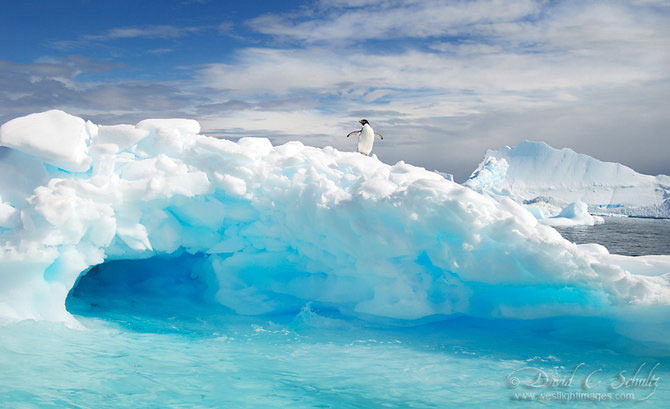 Fotograful David Schultz a marsaluit cu imparatul-pinguin - Poza 12