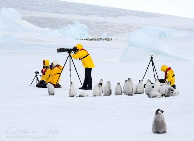 Regele pinguinilor imperiali - Poza 13