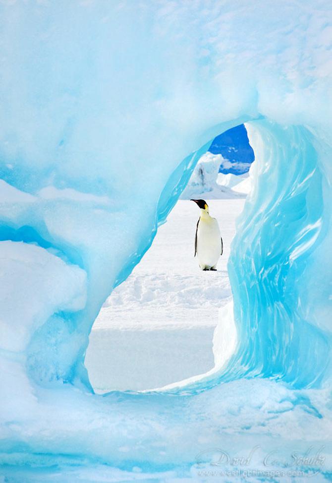 Fotograful David Schultz a marsaluit cu imparatul-pinguin - Poza 14