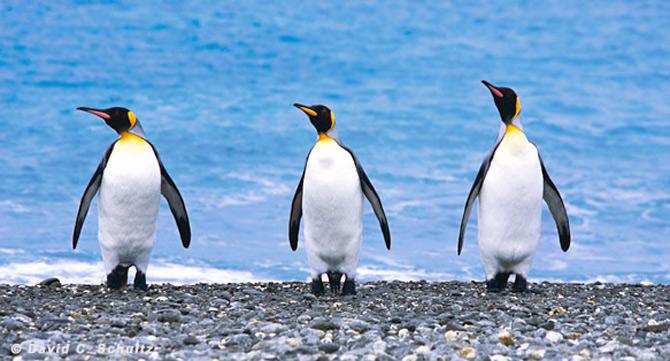 Fotograful David Schultz a marsaluit cu imparatul-pinguin - Poza 25