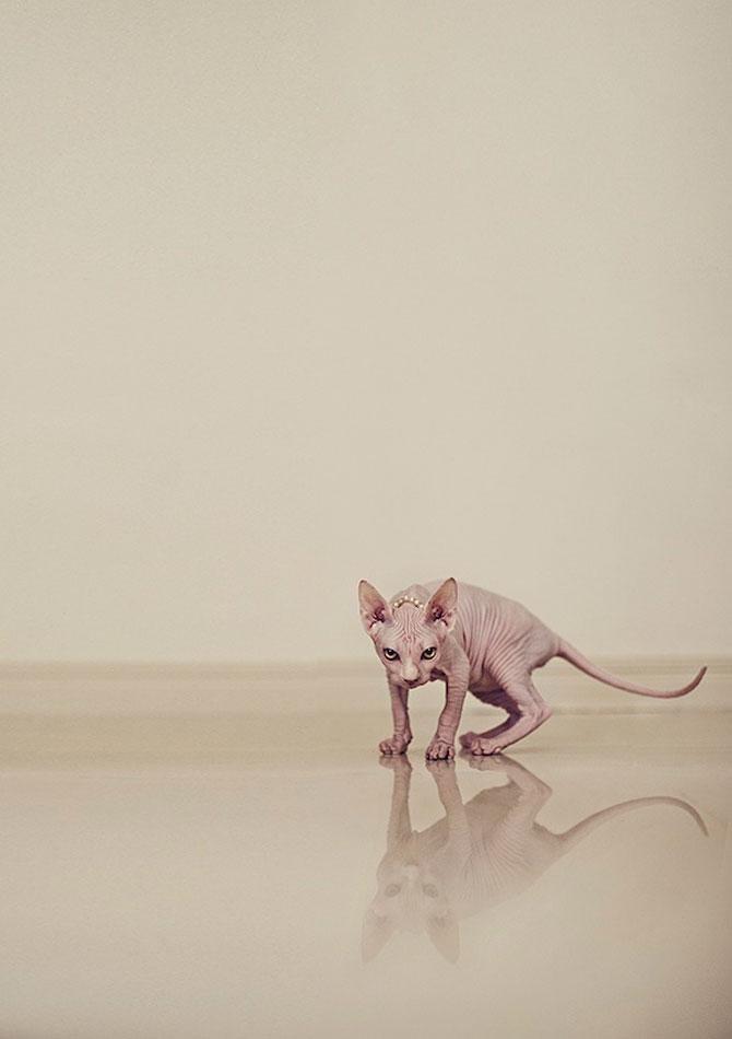 Fotografii cu pisica Sphynx de Serena Hodson - Poza 3