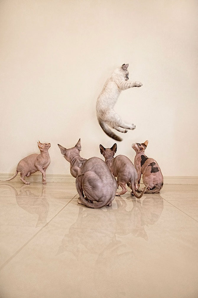 Fotografii cu pisica Sphynx de Serena Hodson - Poza 7