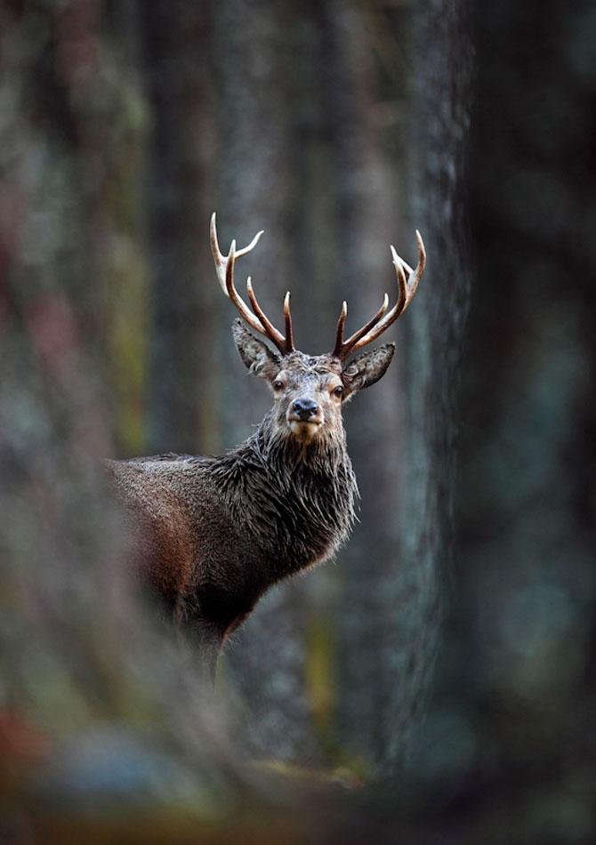 Cele mai frumoase fotografii cu natura Marii Britanii - Poza 2