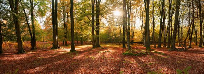 Cele mai frumoase fotografii cu natura Marii Britanii - Poza 6