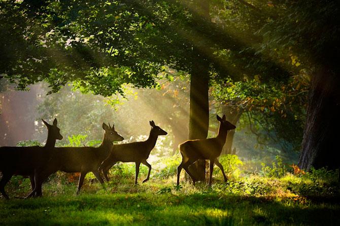 Cele mai frumoase fotografii cu natura Marii Britanii - Poza 8