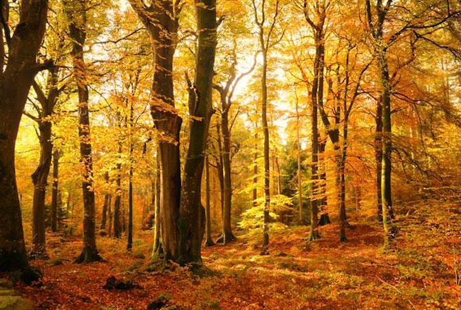 Cele mai frumoase fotografii cu natura Marii Britanii - Poza 9