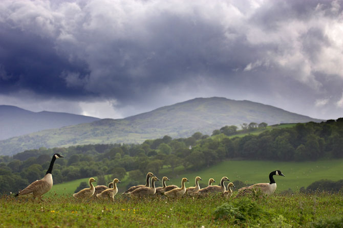 Cele mai frumoase fotografii cu natura Marii Britanii - Poza 11