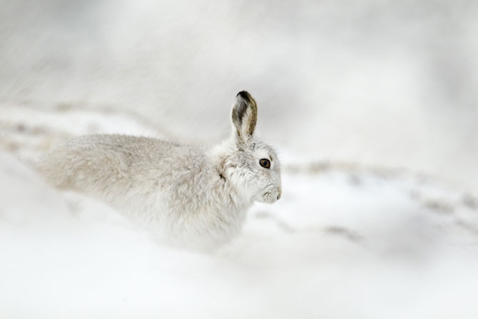 Cele mai frumoase fotografii cu natura Marii Britanii - Poza 13