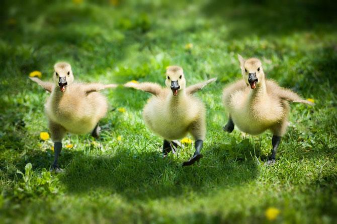 15 poze despre prietenia dintre animale - Poza 1