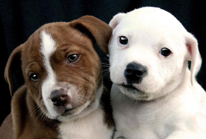 15 poze despre prietenia dintre animale - Poza 2