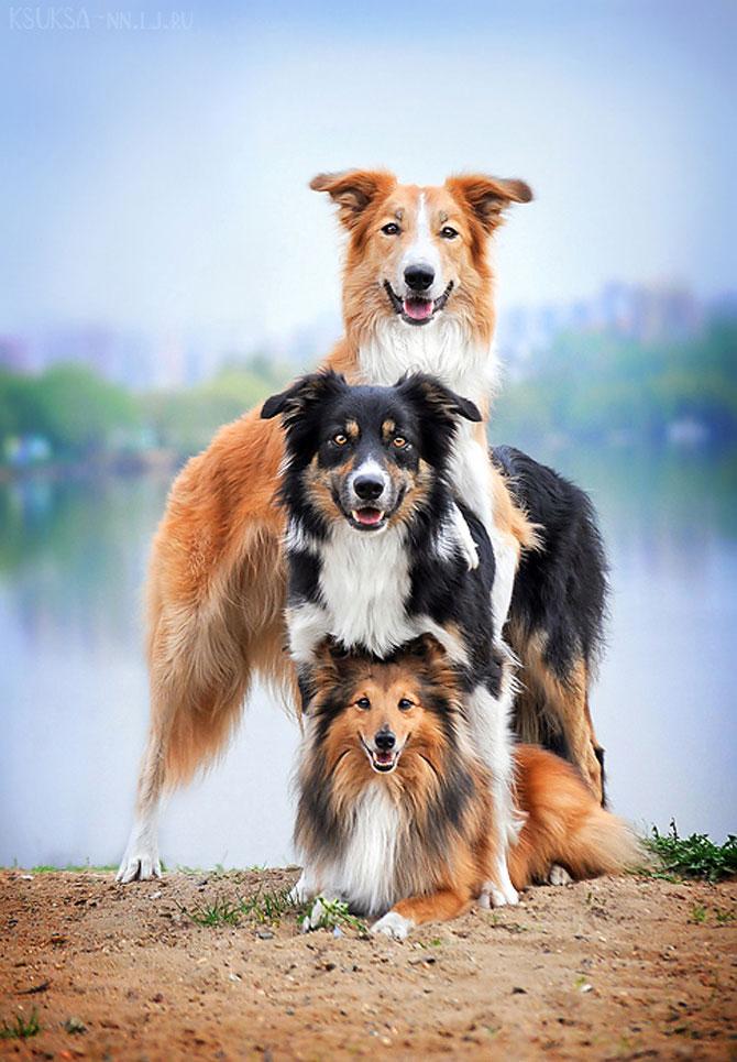 15 poze despre prietenia dintre animale - Poza 3