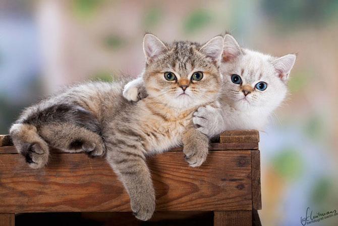 15 poze despre prietenia dintre animale - Poza 5