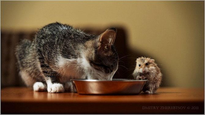 15 poze despre prietenia dintre animale - Poza 6
