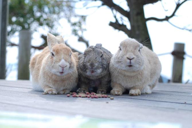 15 poze despre prietenia dintre animale - Poza 7
