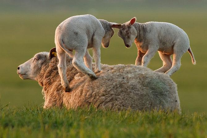 15 poze despre prietenia dintre animale - Poza 8