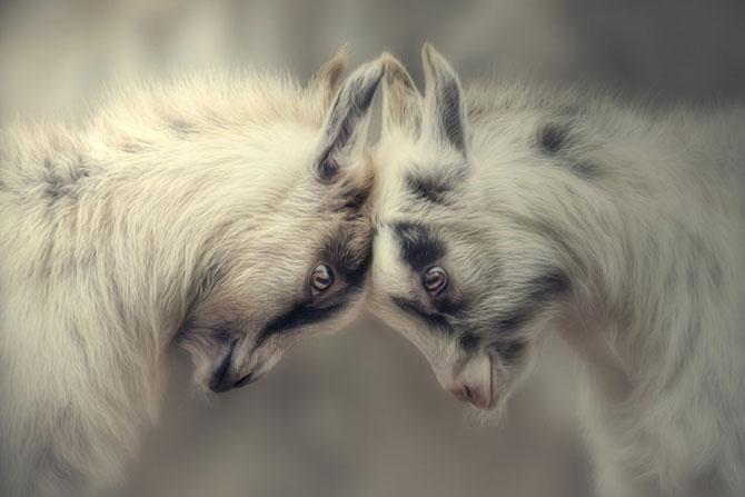15 poze despre prietenia dintre animale - Poza 9