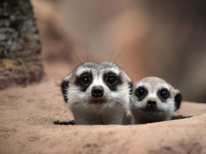 15 poze despre prietenia dintre animale - Poza 10