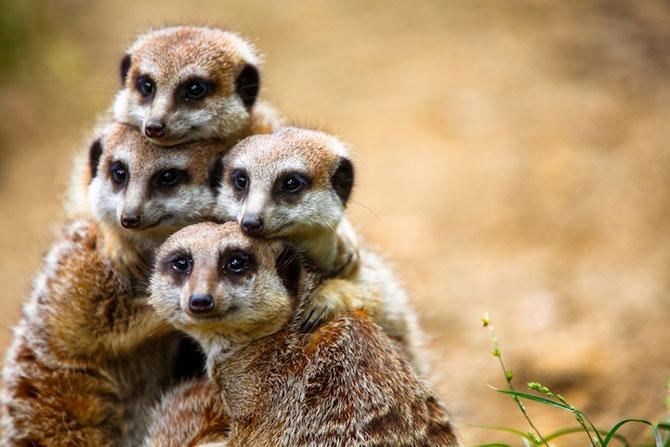 15 poze despre prietenia dintre animale - Poza 11