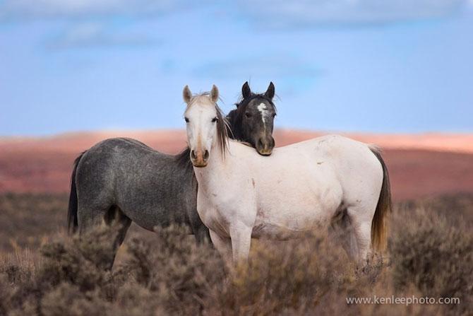 15 poze despre prietenia dintre animale - Poza 14