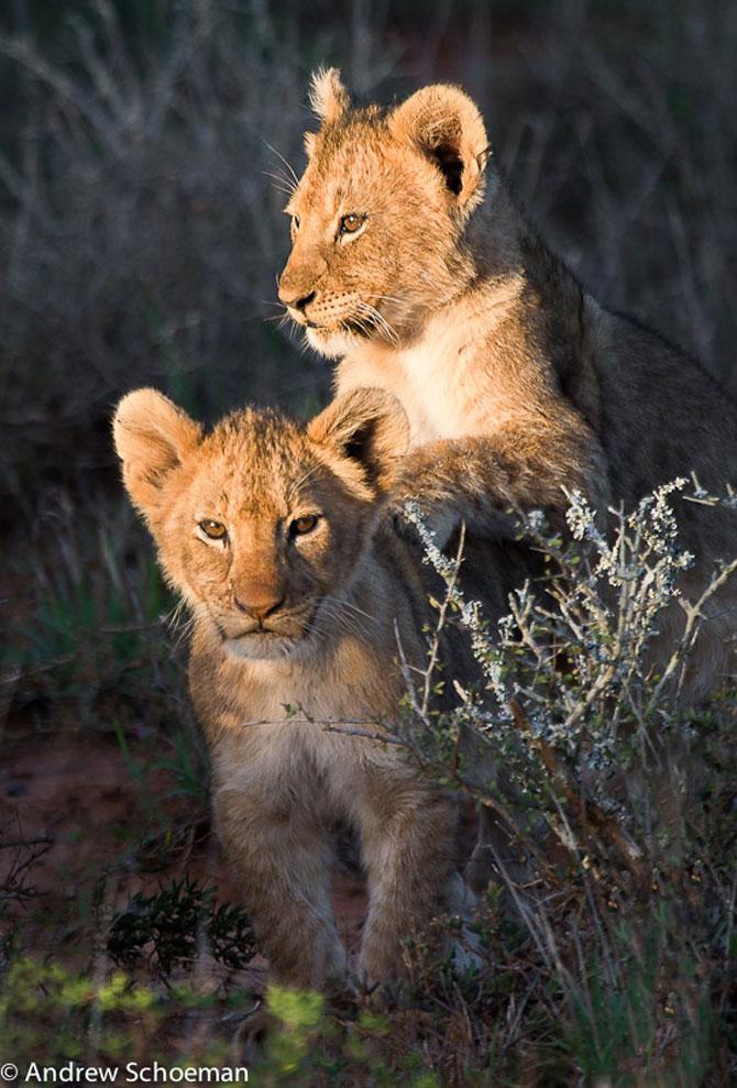 15 poze despre prietenia dintre animale - Poza 15