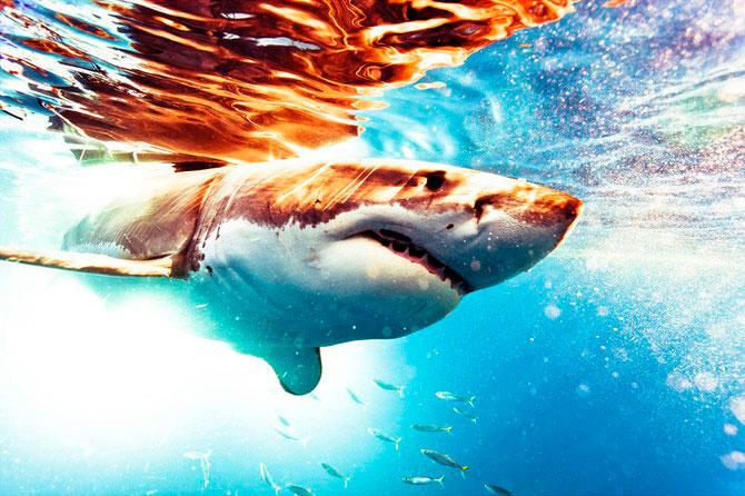 La plimbare cu rechinii, impreuna cu Michael Muller - Poza 1