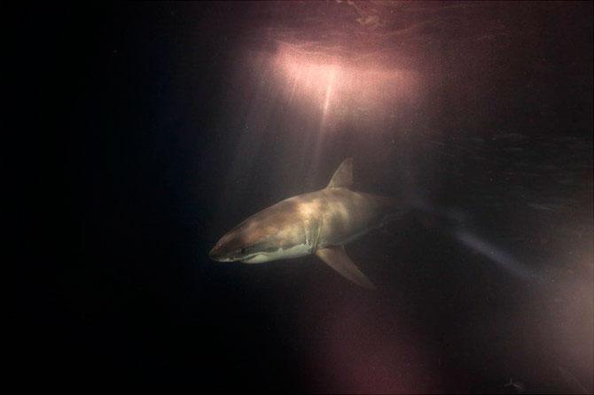 La plimbare cu rechinii, impreuna cu Michael Muller - Poza 2