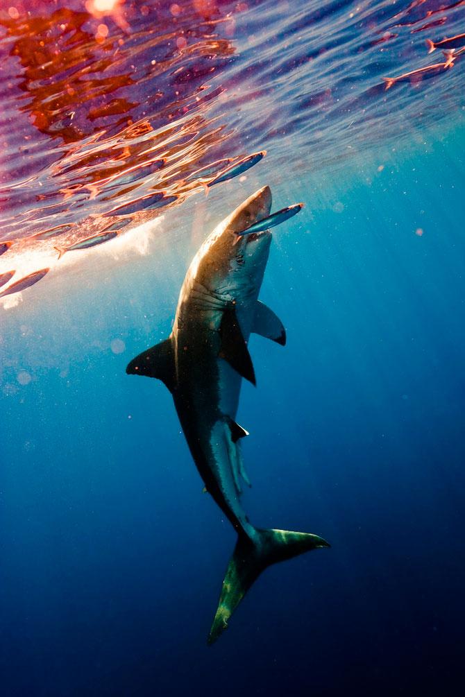 La plimbare cu rechinii, impreuna cu Michael Muller - Poza 4