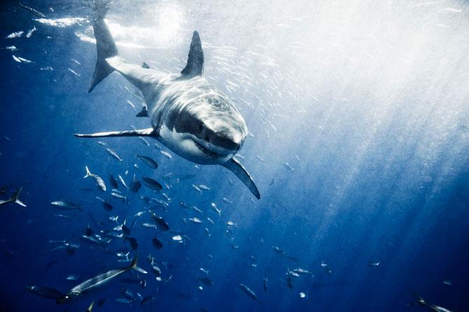 La plimbare cu rechinii, impreuna cu Michael Muller - Poza 5